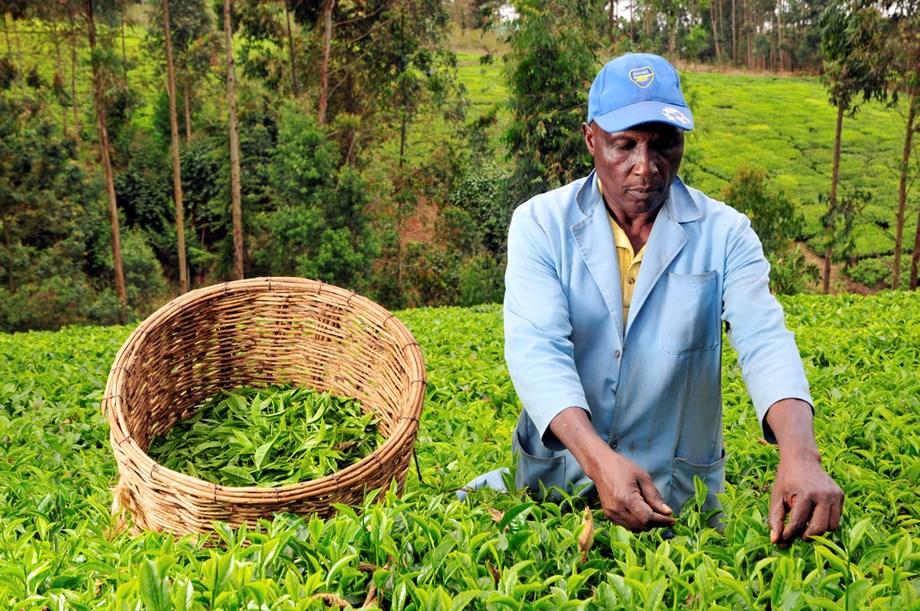 Kenya Tea to exhibit products at European Coffee Expo