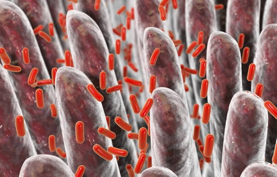 Study: Bacteria evolves to evade anti-bacterial products