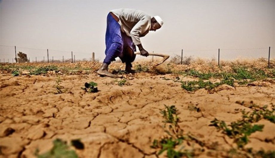 Global climate change could trigger food insecurity risk: Study