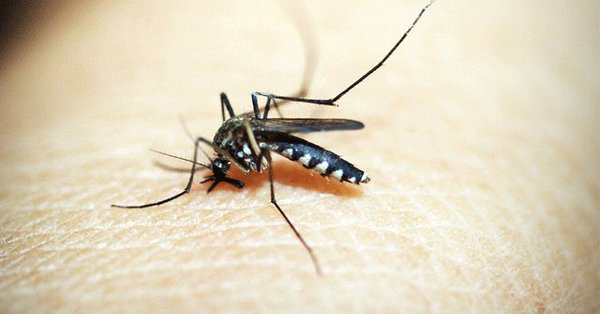 Indian-origin scientist offers hope for malaria therapy