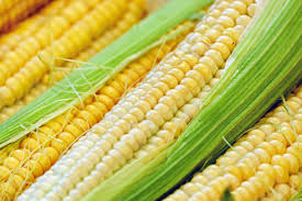 DowDuPont putting off trials for approval of genetically modified variety of corn