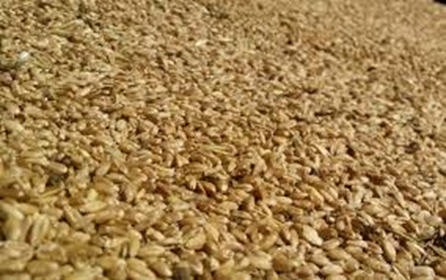 Russian wheat export price rises due to unfavourable weather