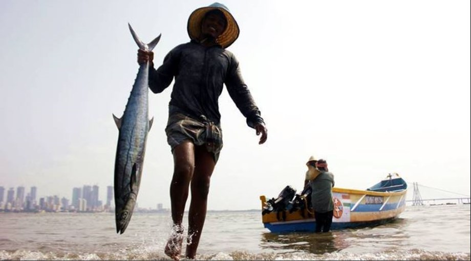 Goa government lifts ban on import of fish from other states