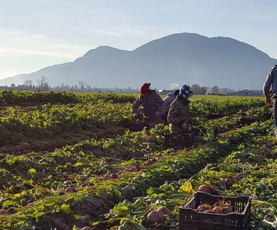 Growing fruits and vegetables fetched better returns to farmers