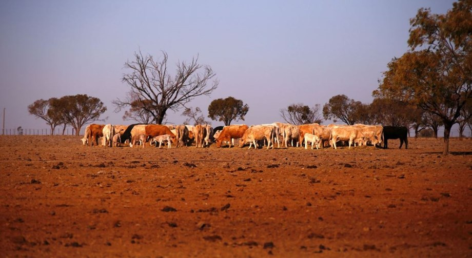 Worst drought in living memory sweeps parts of eastern Australia