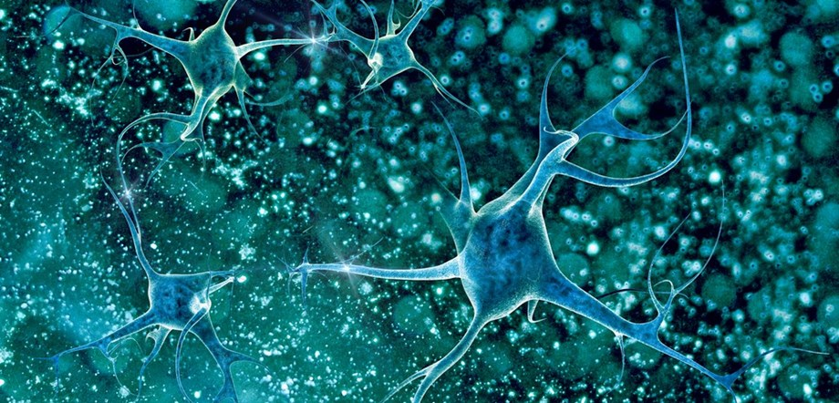 Brain-derived neurotrophic factor reverses cocaine addiction relapse in rats