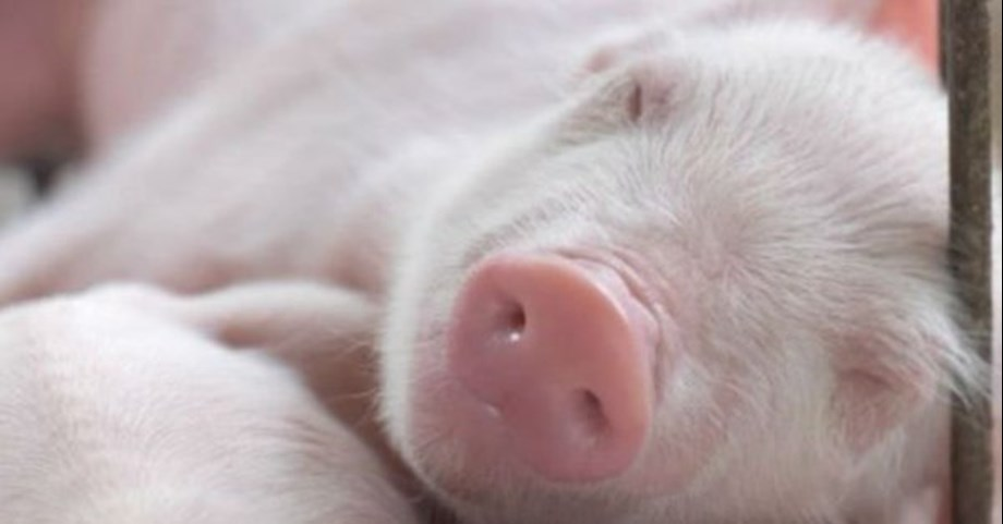 Seeing images of baby animals reduces people's desire for eating meat