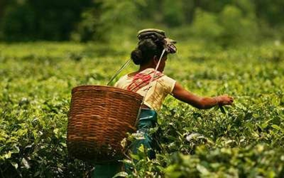 Joint Forum of Tea Garden workers call three-day strike demanding hike in min wages