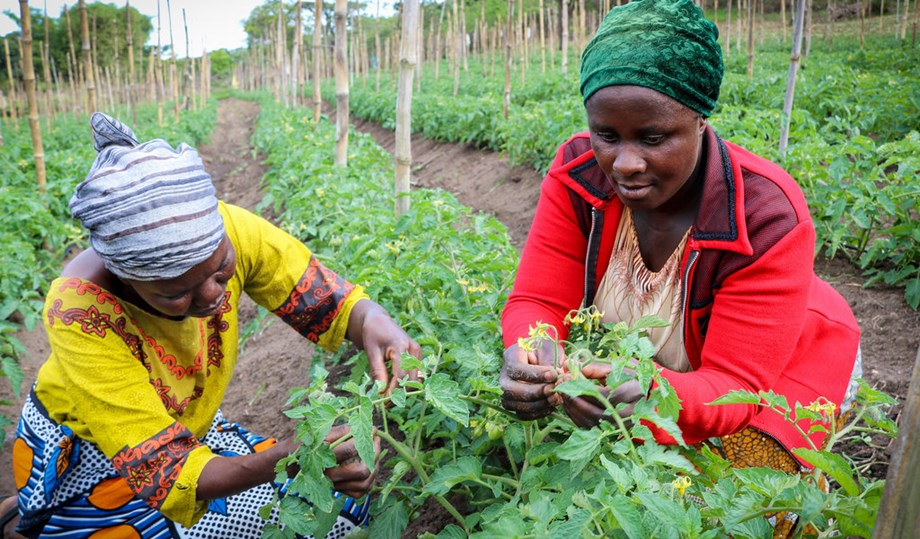 AfDB calls for transformation of agriculture sector of Africa with technology