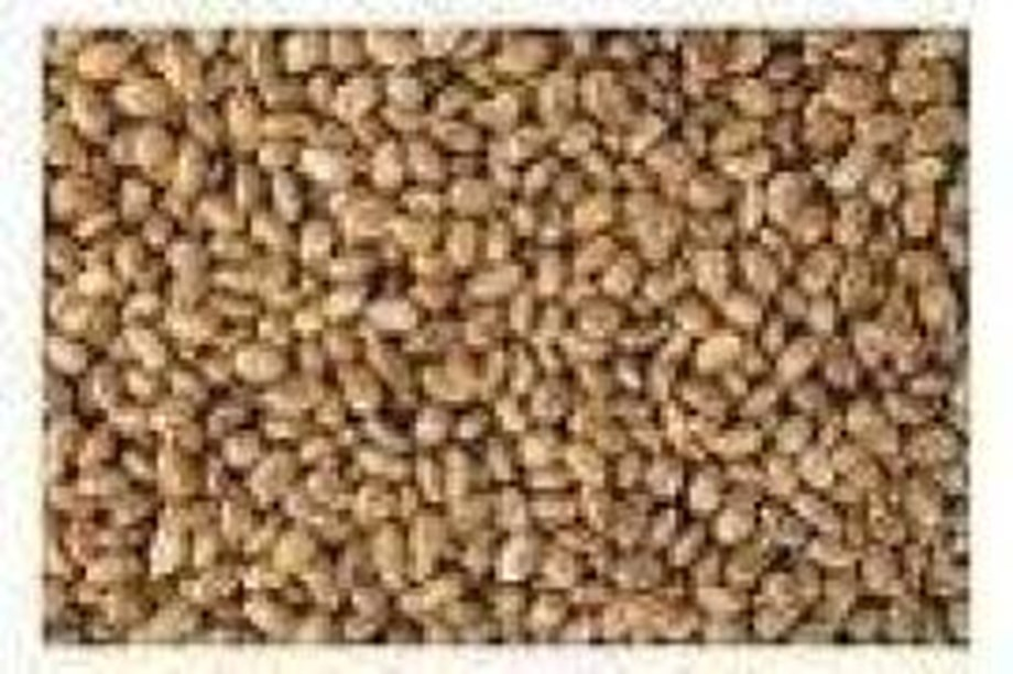 Castor seed futures climb by Rs 53 per quintal