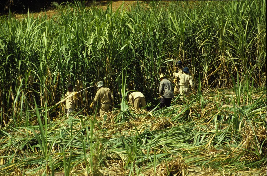 India to pay sugarcane producers to help sugar industry