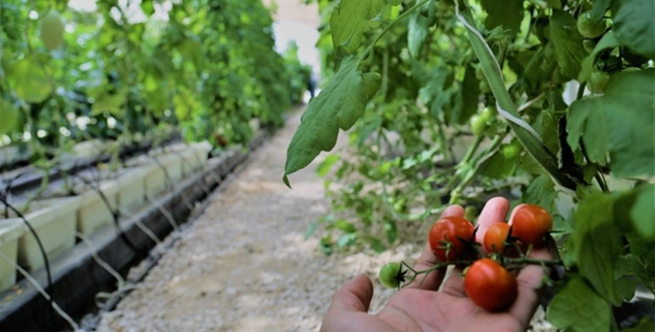 Future food security is about exploring non-traditional crops and breakthrough technologies