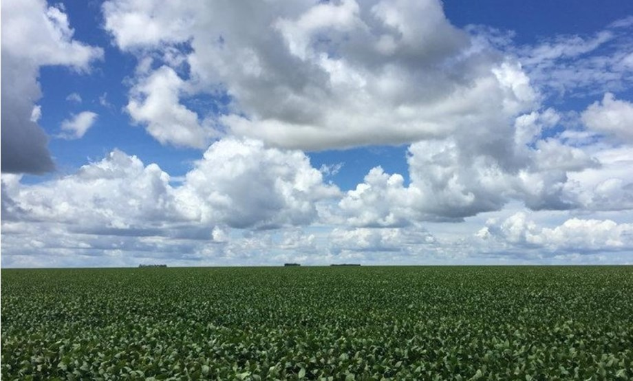 Brazil to produce record 119mt of soybeans