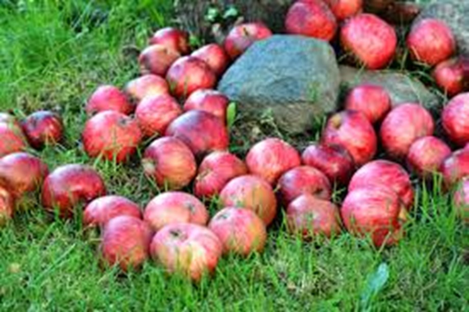 High tariffs on apples by India would hurt American growers