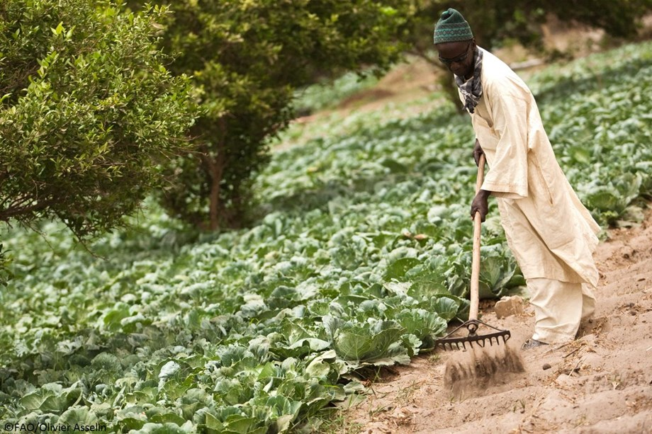 FAO's Afrisoilsprogramme to increase soil productivity by 30 percent