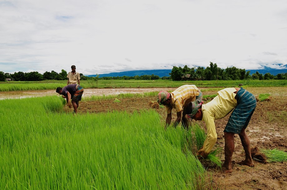 importance of agro based industry Agro-based industries in india - problems faced and development potential agriculture is the dominant employment providing sector in economy and as such, has a huge impact on welfare of people in recent times agro based industry especially food processing has come under intense focus.