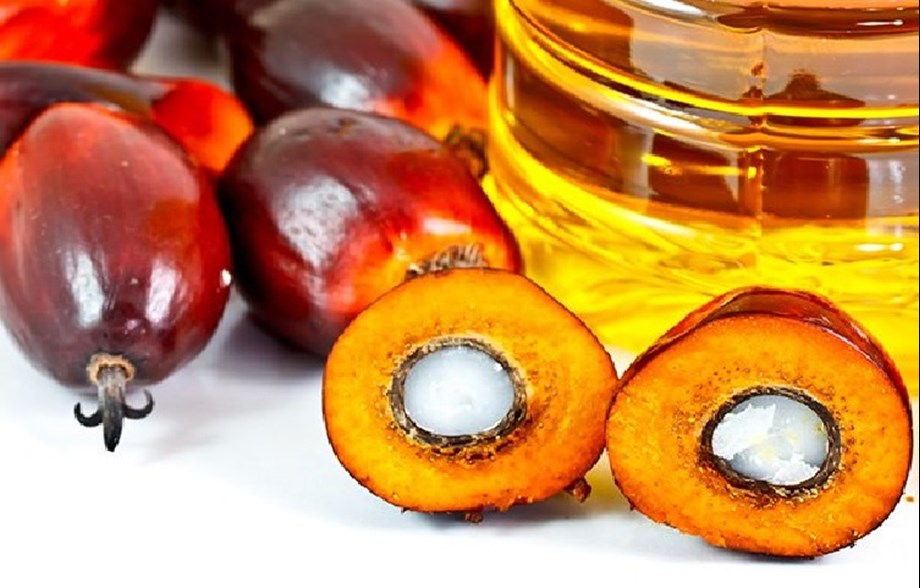 EU to phase out palm oil from transport fuel by 2030