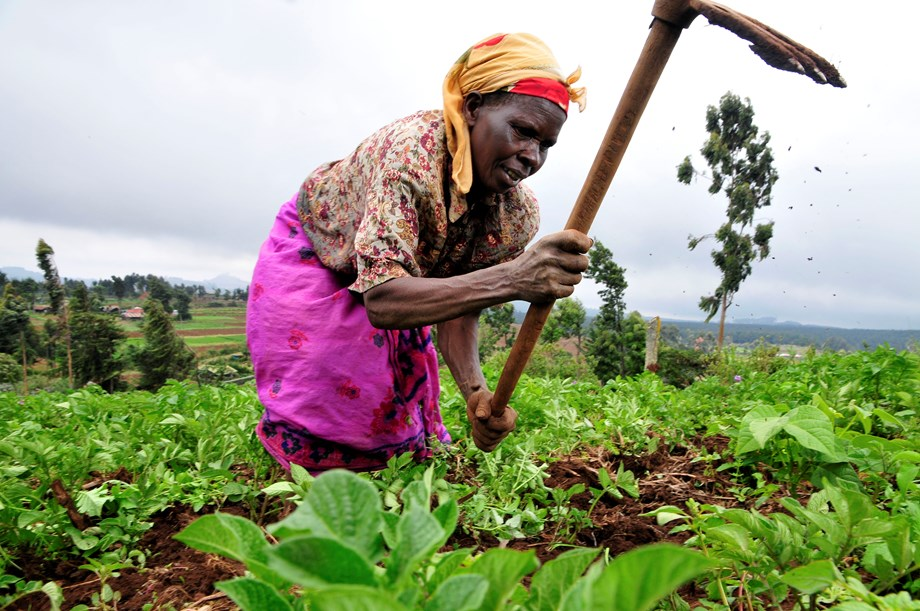 New opportunity for Angolan smallholder farmers to boost food security