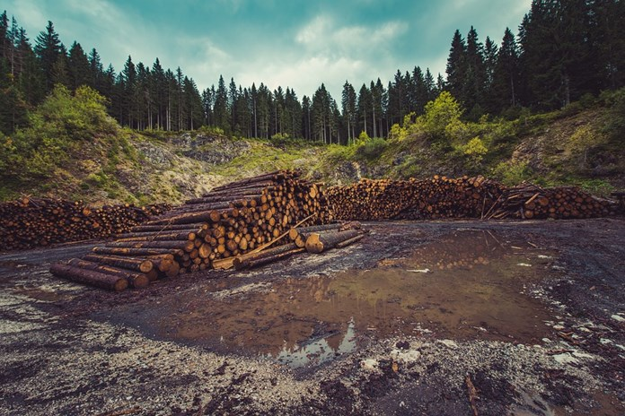 Colombia lost more than 200,000 hectares of forests due to deforestation