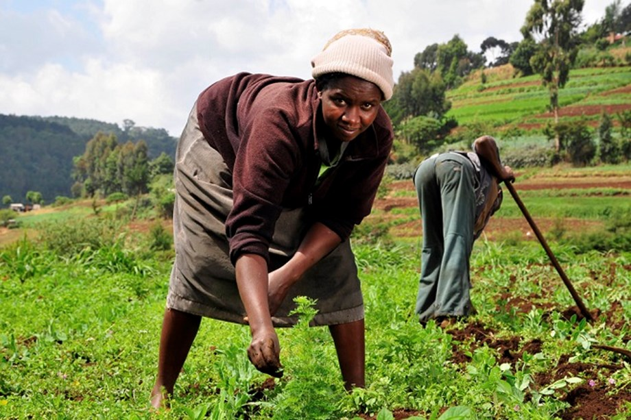 Digital farming: The rise of digitalization in African agriculture