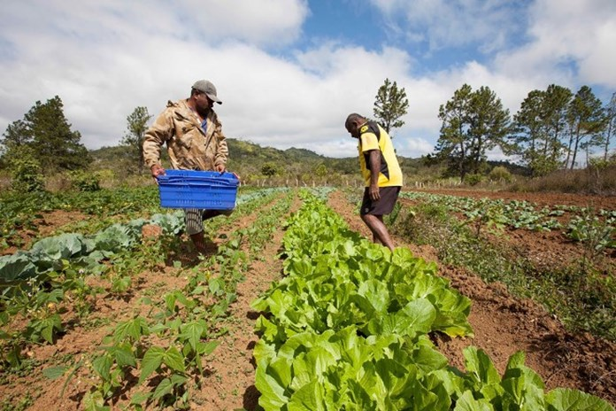 Climate Smart Agriculture, combating climate change across Africa