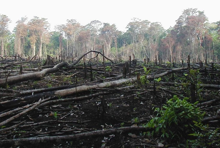 Narco-deforestation may boost disaster risks in Central America