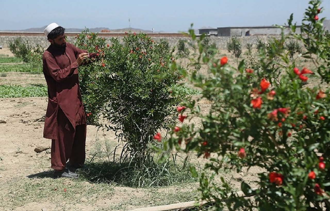 Afghanistan: New Farming Methods Increase Prosperity and Hope in Khost Province
