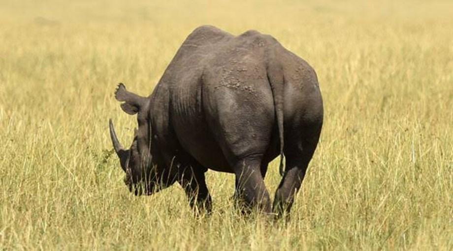 Rhinoceros, Hyenas, Penguin declared extinct in Angola