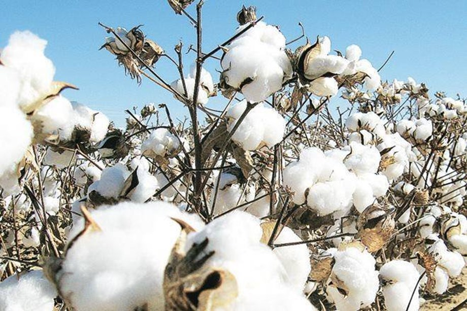 Indian Texpreneurs Federation to bring down trash level in cotton