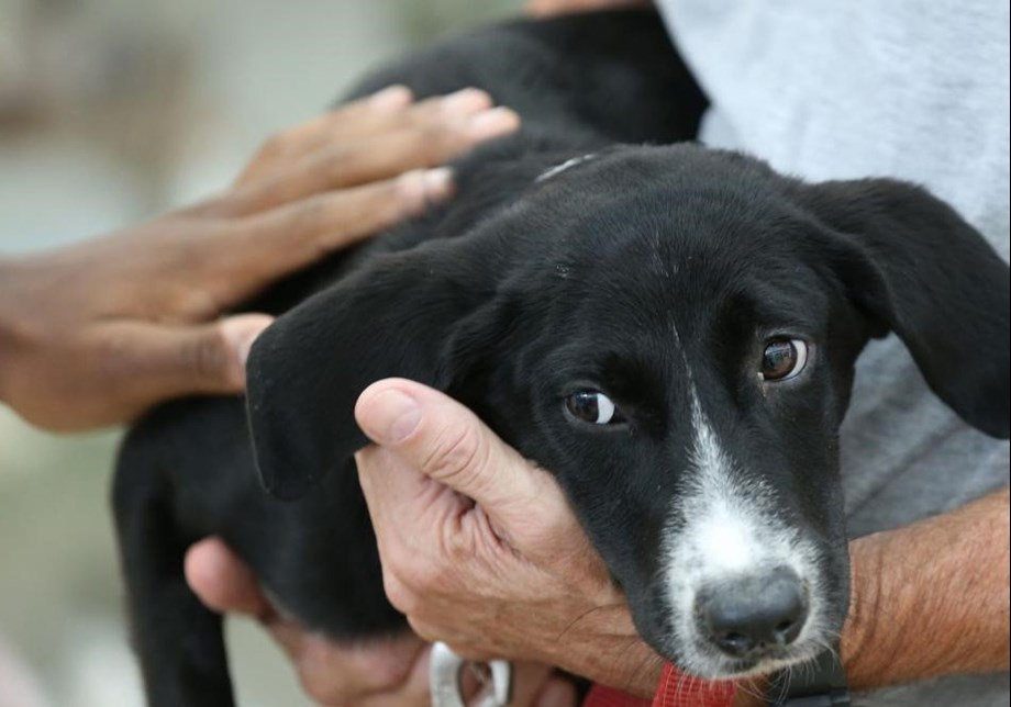 South Korean court declares killing of dogs illegal