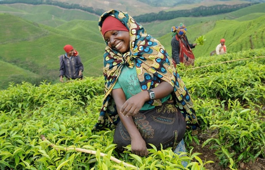 World Bank releases economic growth report on Rwanda