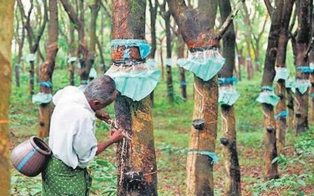No tax on plantation in Kerala, will formulate a plantation policy