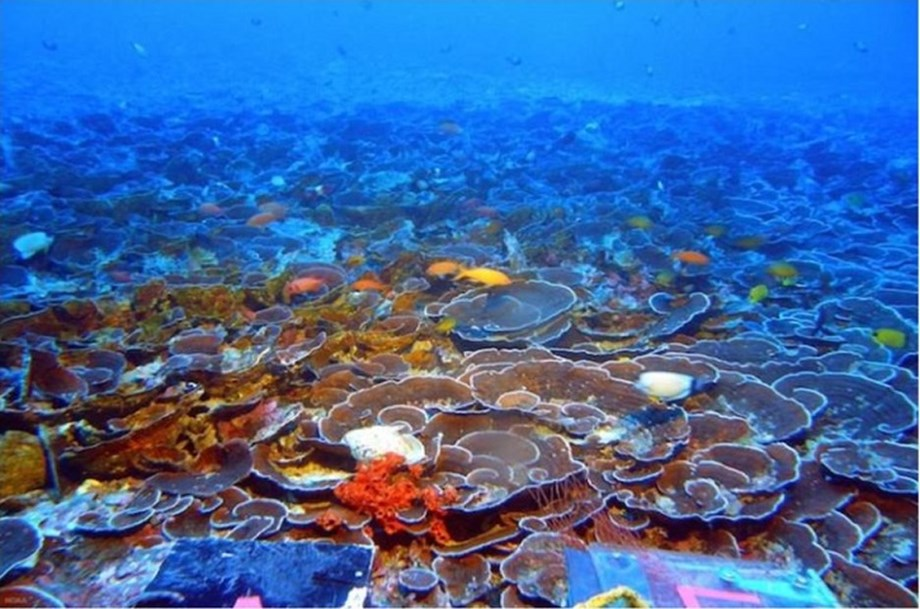 Deep Coral Reefs far away from being Twilight Zone