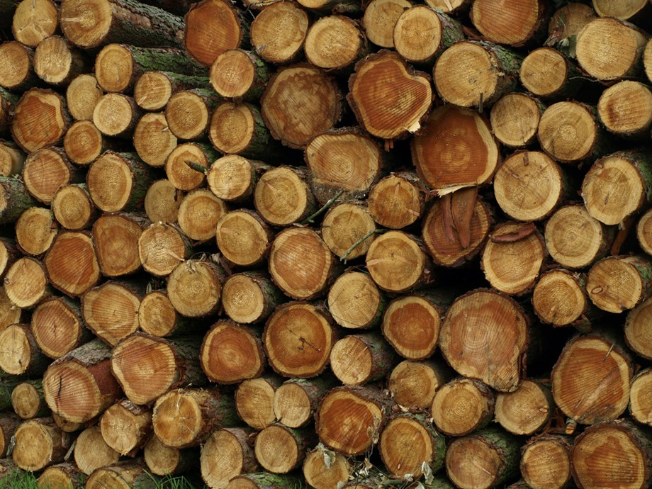 Governance is key to boosting intra-Africa trade of timber products: African Development Bank