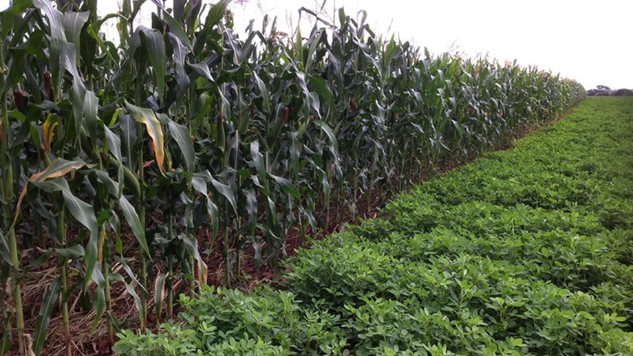 Getting Zimbabwe's agriculture moving again: The beckoning of new era