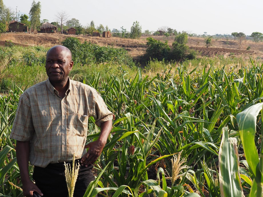 IMF releases paper on foreign direct investment in farm land