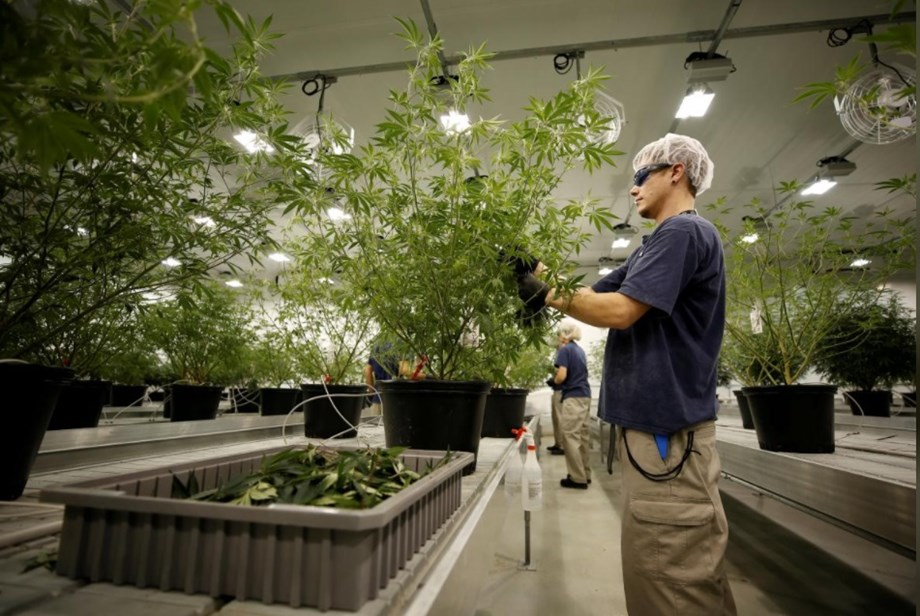 Sweden investors earn profit from cannabis stocks even after strict laws
