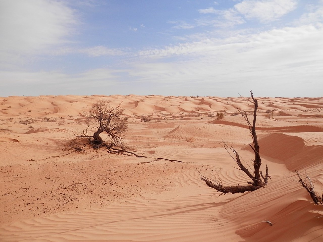 The Great Green Wall of Africa, Sahel needs it