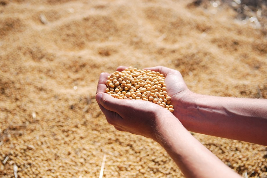 Brazil adds rail capacity as farmers harvest record soy crop