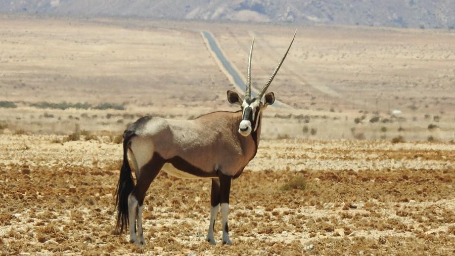 African biodiversity, heritage under pressure