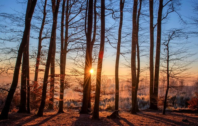 Thanks to forests, Sweden ranks first in greenhouse gas absorption