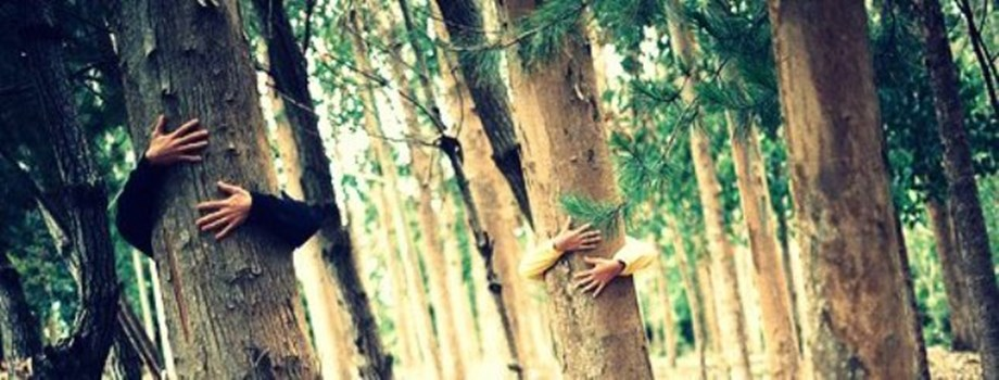 Chipko Movement's 45th anniversary: All you need to know about this peaceful forest conservation initiative