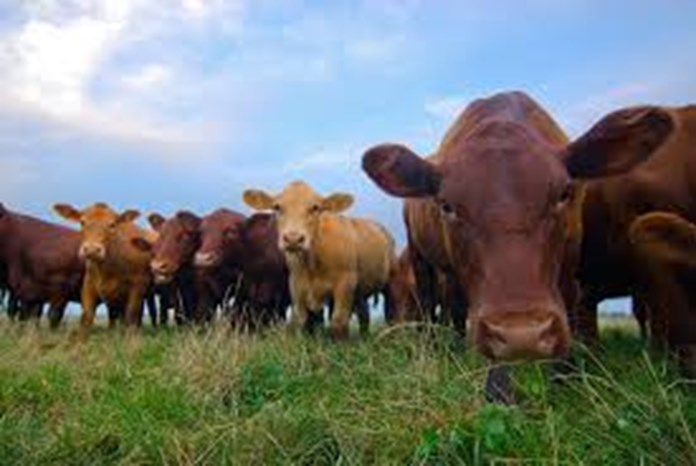 Ethiopia to promote domestic production of veterinary drugs
