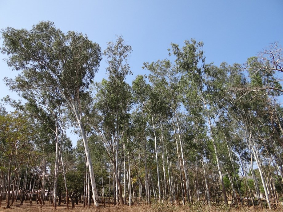 Conservationists opposes India's plan for commercial plantations