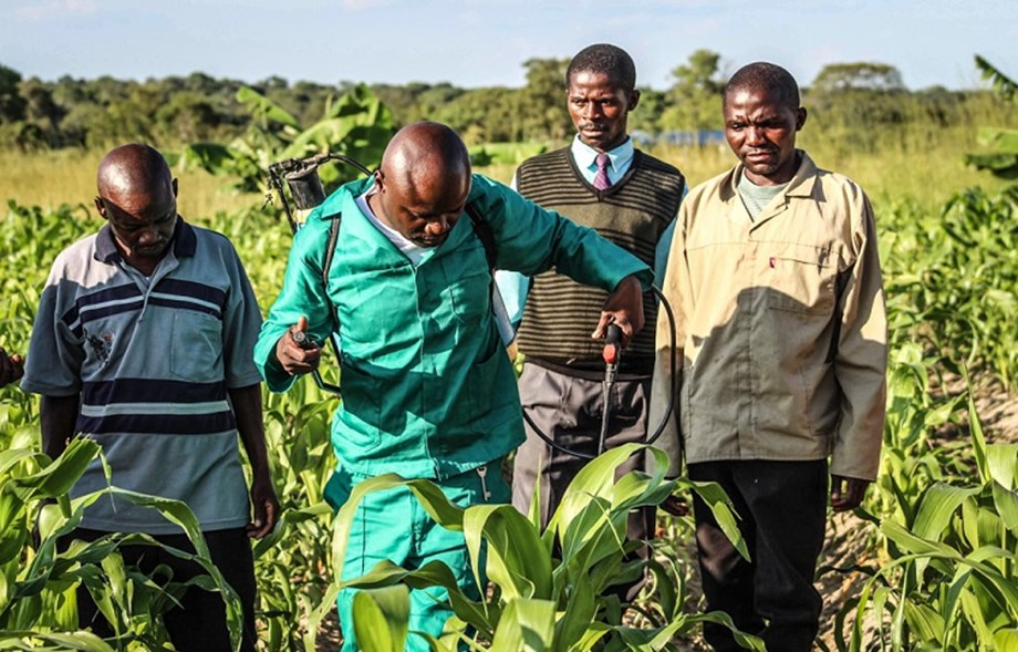 Researchers urge government to adopt genetically modified seeds to fight armyworm