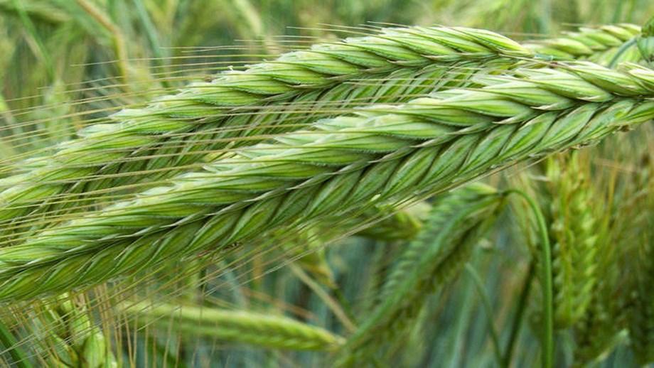 Secretary Perdue Issues USDA Statement on Plant Breeding Innovation