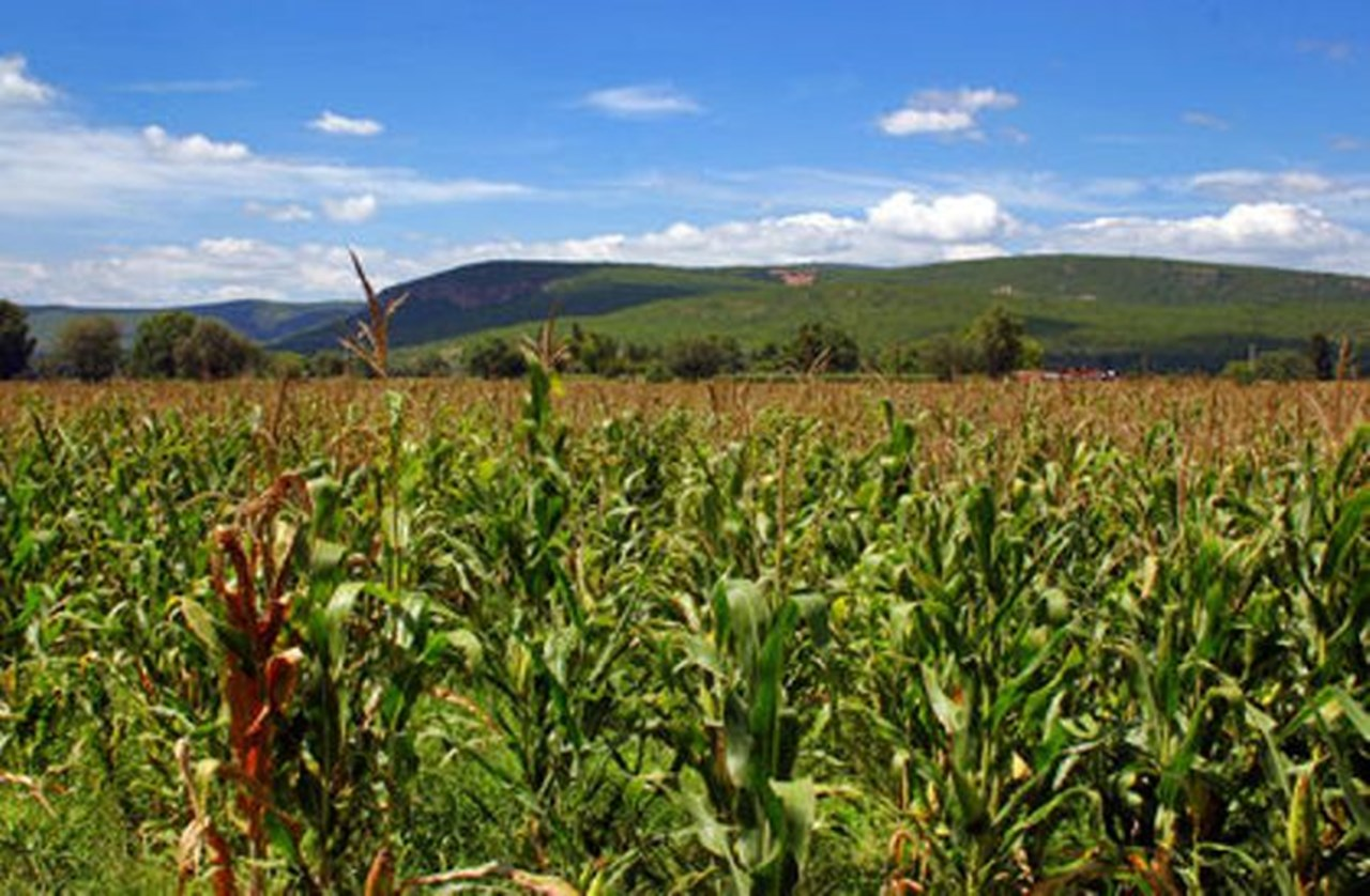 Agriculture: Key to Somalia's Economic Growth and Poverty Reduction