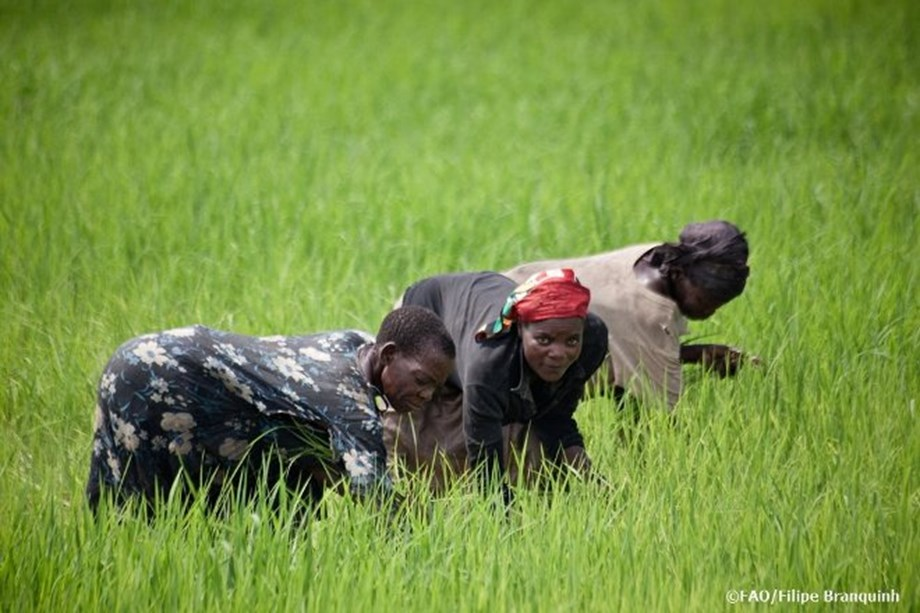 2nd International Symposium on Agroecology to be held in Rome