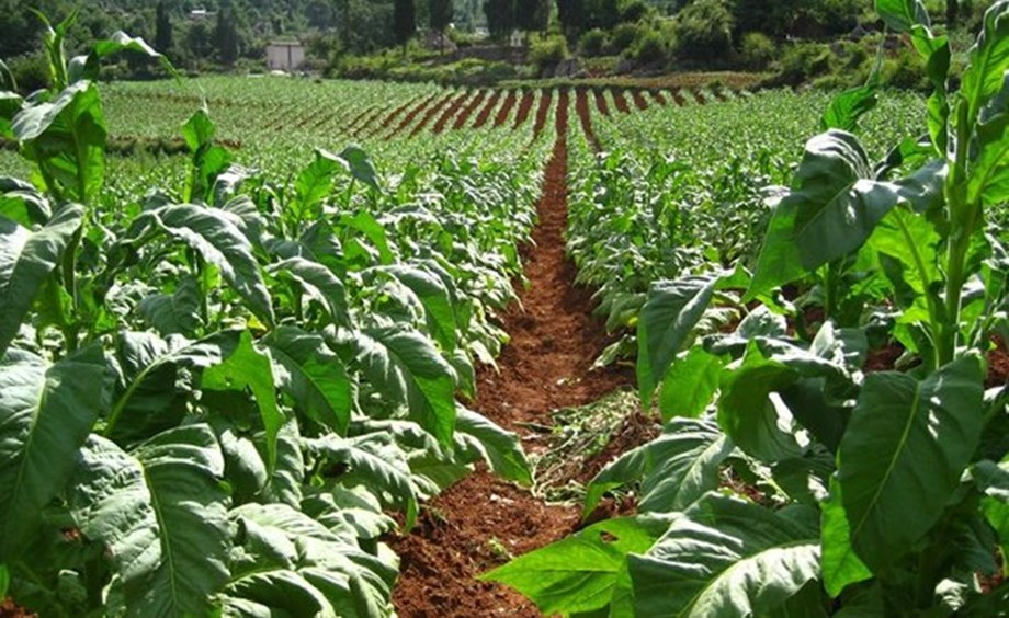Private sector praises command agriculture against trade deficit