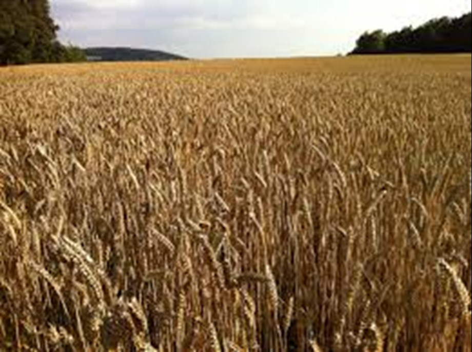 Wheat futures rise 0.30% on spot demand